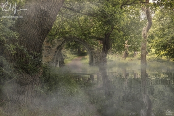 """Misty Woodland Archway"" - Digital Painting/Artwork (Colin Myers)"