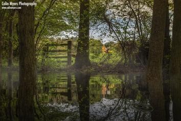 """Misty Woodlands"" - Digital Painting/Artwork (Colin Myers)"
