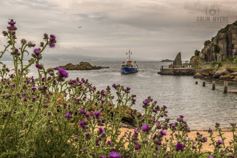 31 Thistles, Boat & Harbour
