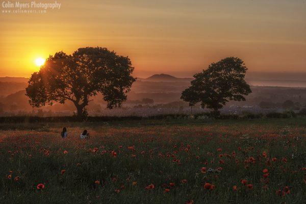 Midlothian Poppies at Sunset